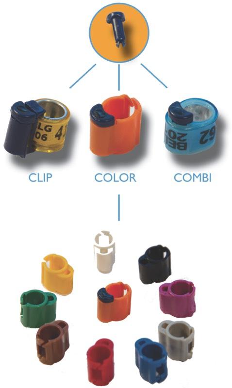 Le ring peut aussi servir de baisodrome - 2 6